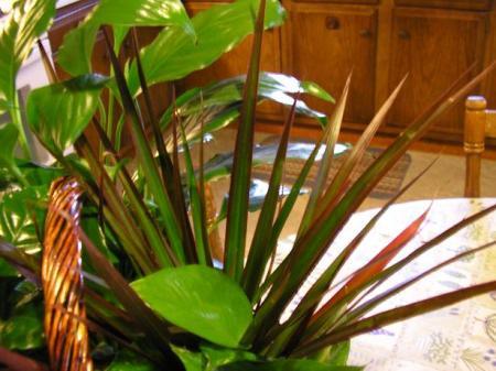 plants-0012