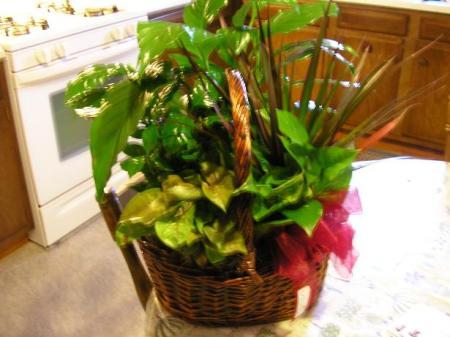 plants-0022